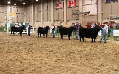 2017 Michigan Beef Expo Sale Report