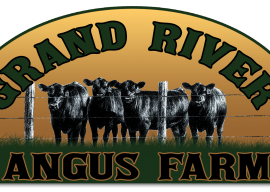 American Angus Association Announces the Ten Michigan Breeders who Registered the Most Angus