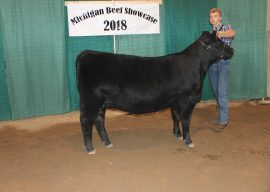 2018 Michigan Angus Association Junior Preview Show – CORRECTION