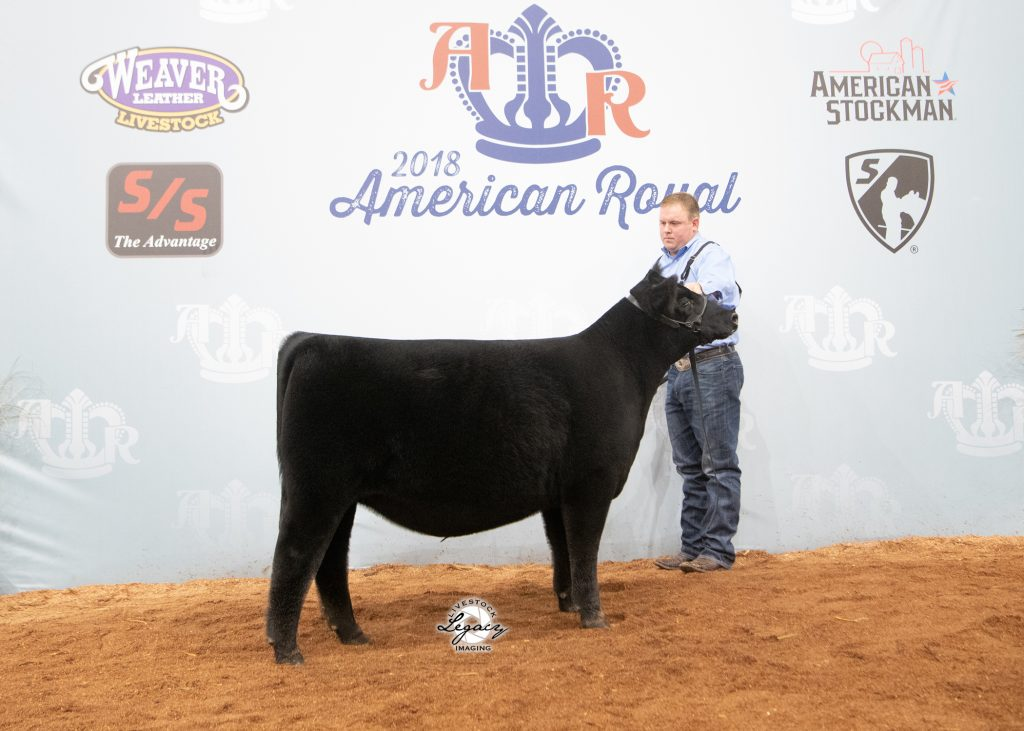 Early Junior Heifer Calf Champion