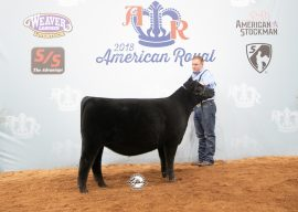2018 American Royal Super Point Roll of Victory (ROV) Angus Show