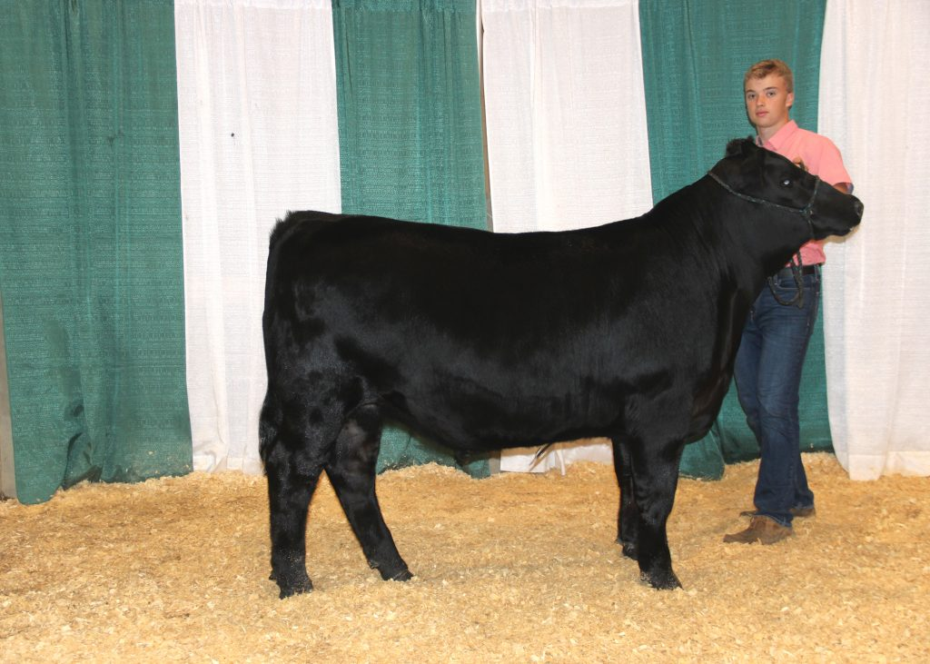 Grand Champion Bred-and-owned Steer