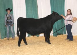 2019 Michigan Angus Association Preview Show