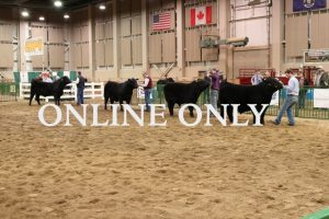 Beef Expo 2021 - ONLINE ONLY