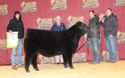 2021 Dixie National Roll of Victory (ROV) Angus Show Results